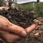 Il fertilizzante come e quando usarlo