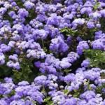 Le piante antizanzare