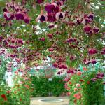 Primavera nelle Fiandre: le migliori fiere dedicate ai fiori