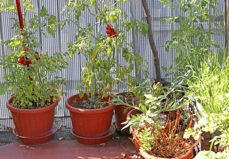 Come coltivare i pomodori in vaso mini guida di for Piantare pomodori