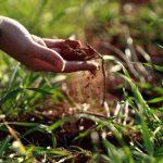 I migliori fertilizzanti naturali per le piante