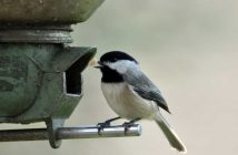 costruire nidi per uccelli selvatici