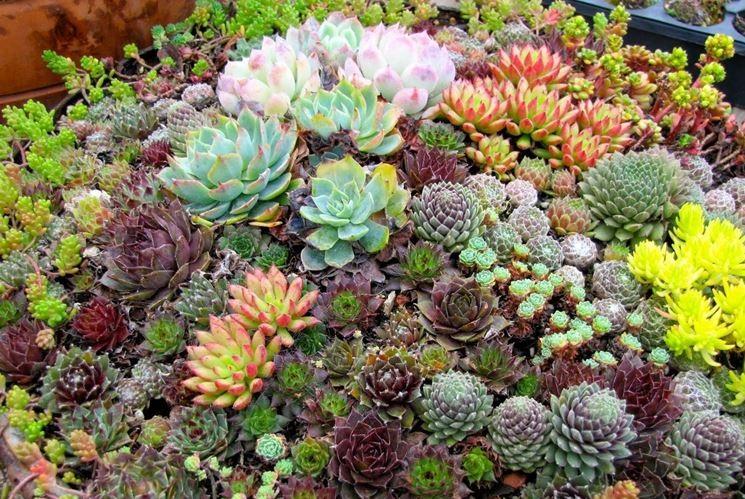 aiuole giardino con piante grasse