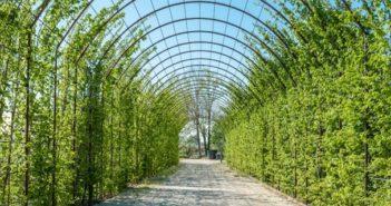 piante rampicanti come scegliere