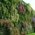 Giardini verticali: cosa sono e come realizzarli