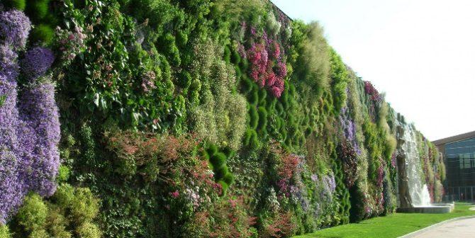 giardini verticali cosa sono e come realizzarli