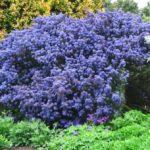 Piante perenni da giardino che resistono all'esterno tutto l'anno