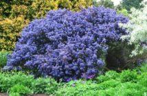 Piante perenni da giardino resisistenti tutto l'anno