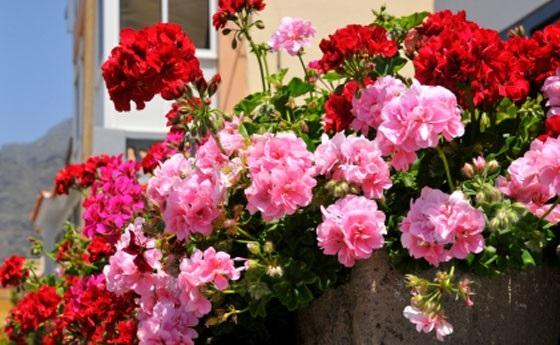 balconi fioriti immagini