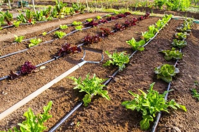 irrigazione a goccia come funziona