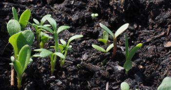 calendario delle semine cosa piantare a giugno