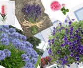 Quali sono i 5 fiori estivi più belli?