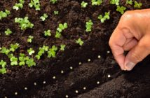 cosa seminare a settembre nell'orto le colture più indicate