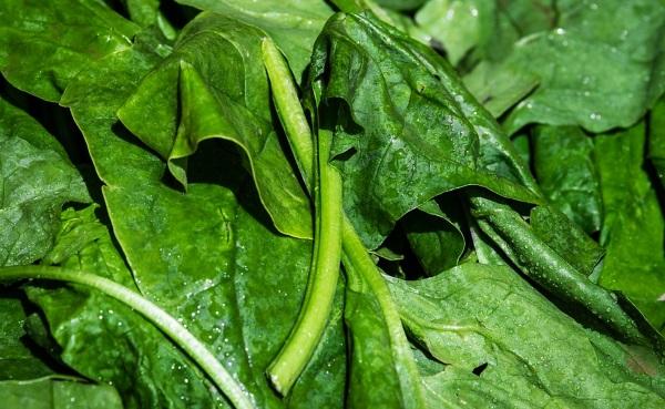 piantare spinaci a settembre