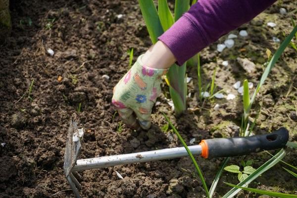 lavori in giardino per estirpare le erbacce infestanti