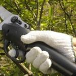 Come scegliere le giuste forbici da giardino