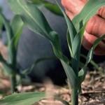Manutenzione delle piante: perché l'azoto è importante