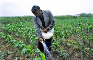 fertilizzanti al potassio