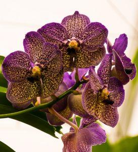 bouquet per san valentino orchidee