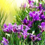 Guida al linguaggio dei fiori