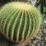 Come coltivare i cactus