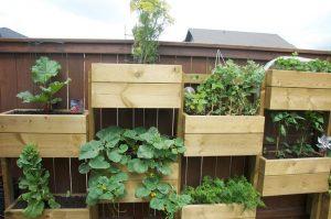 fare l'orto in piccoli spazi