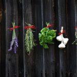 Quali spezie piantare nel proprio giardino