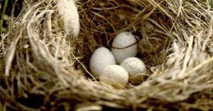 nido per uccelli