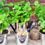 Come creare un orto sul balcone