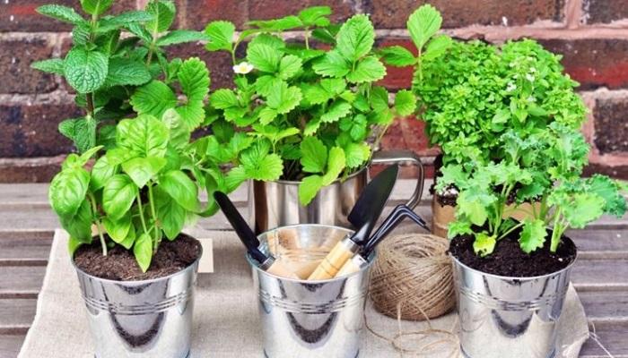 Mini Giardino Sul Balcone : Orto sul terrazzo cosa e come coltivare ville e giardini