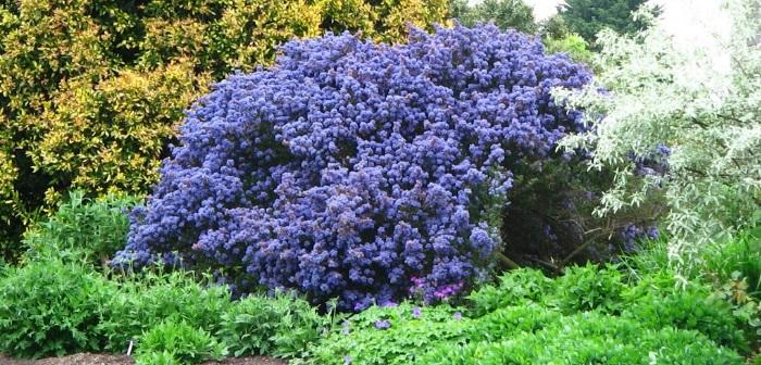 Piante perenni da giardino resistenti tutto l 39 anno for Cespugli fioriti da giardino