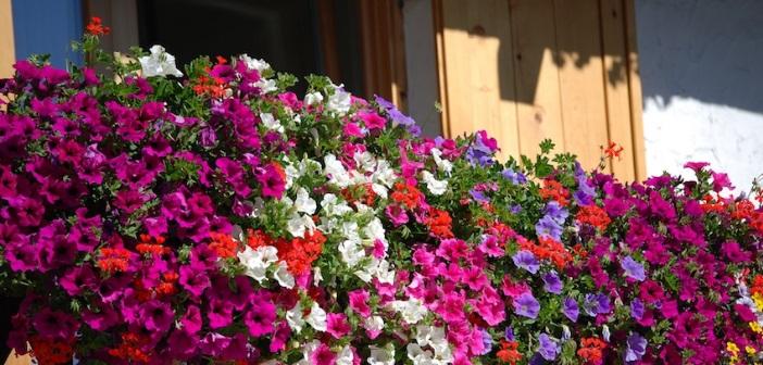 balconi fioriti quali piante e fiori scegliere