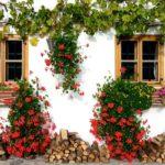 Piante grasse rampicanti: quali scegliere per il proprio giardino?