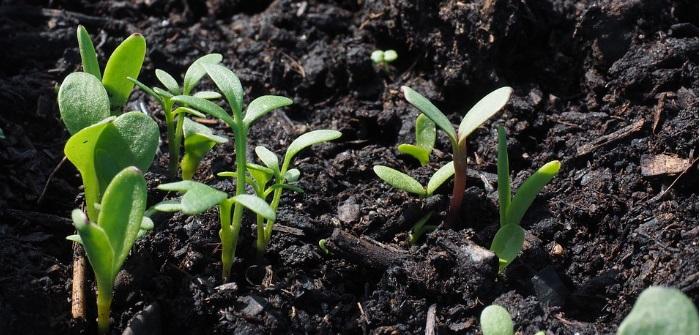Giardini nel mondo guide e consigli su giardini e for Cosa piantare nell orto adesso