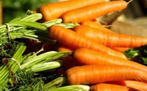 cosa piantare a settembre carote