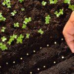 Cosa seminare a settembre: le colture più indicate per questo periodo