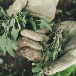 Come eliminare le erbacce infestanti