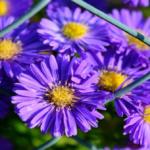 I migliori 10 fiori autunnali da coltivare