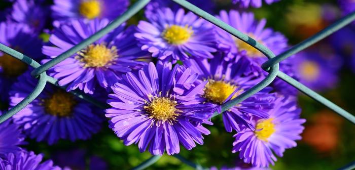 fiori autunnali 1