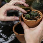 Giardinaggio hi-tec: i migliori gadget ecologici per un prato perfetto