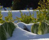 Orto in inverno: come prendersene cura?
