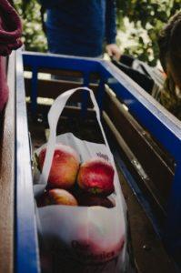 mele prodotte da orto urbano
