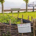 Orti urbani: cosa sono e come coltivarli