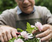 Se ti ritrovi a parlare con le piante e con i fiori non preoccuparti