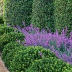 """Dry Garden: cos'è e come funziona il """"giardino senz'acqua"""""""