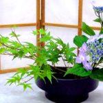 Ikebana, l'arte giapponese di comporre i fiori