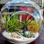 Micro giardini, la nuova tendenza della coltivazione indoor