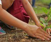 Giardinaggio per principianti: come iniziare?