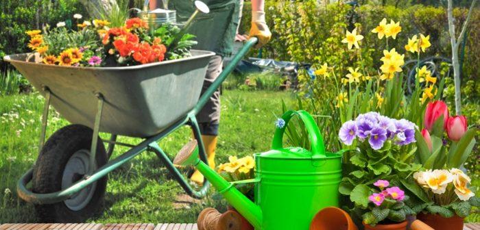 La cura delle piccole e grandi aree verdi fra competenze e sostenibilità