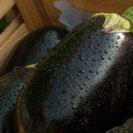 Come coltivare le melanzane: dalla semina alla raccolta